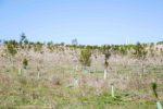 El Bosque Scania aumenta en 4.782 árboles